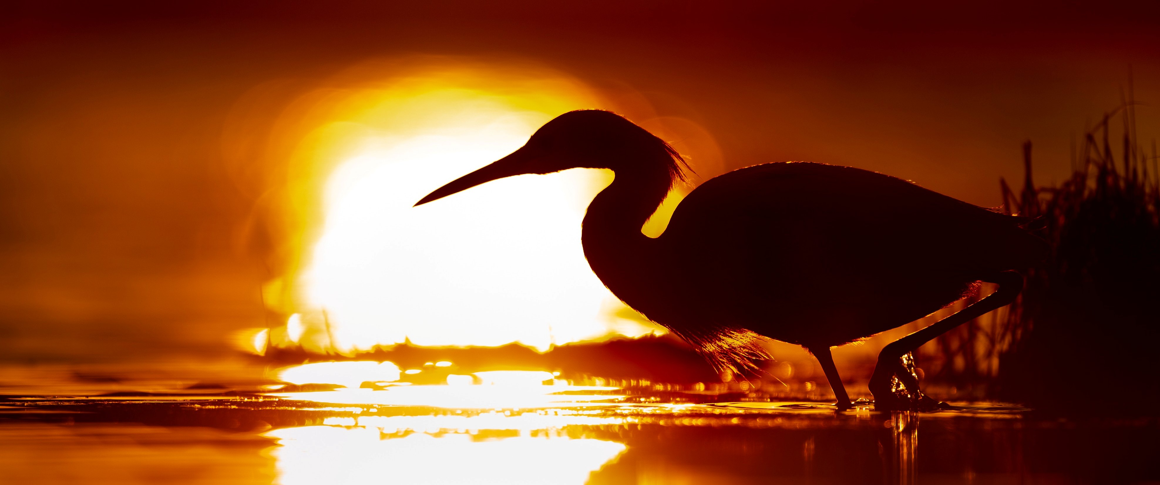 early bird banner - ray-hennessy-723278-unsplash.jpg