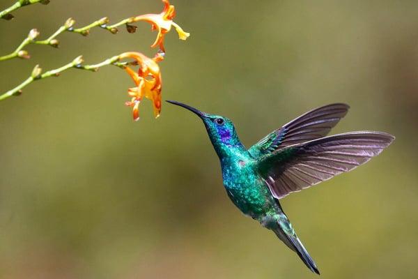 hummingbird - james-wainscoat-hjmED1qivmc-unsplash